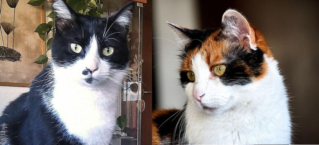 I gatti Aramis e Bastet